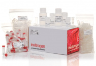 Набор PureLink Microbiome DNA Purification Kit